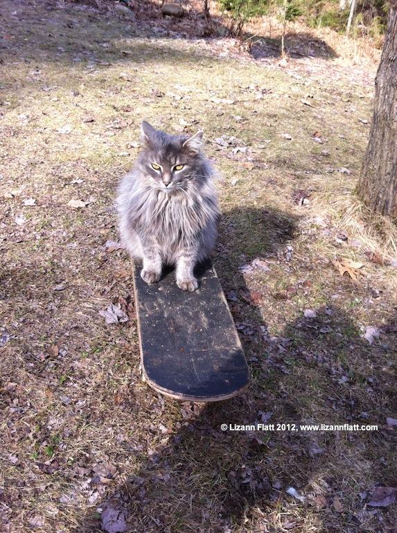 ashskateboard