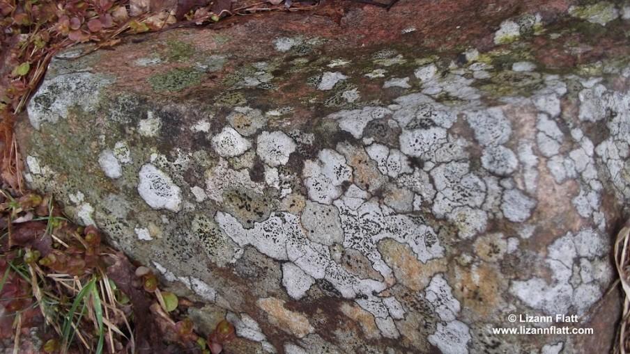 lichen-art